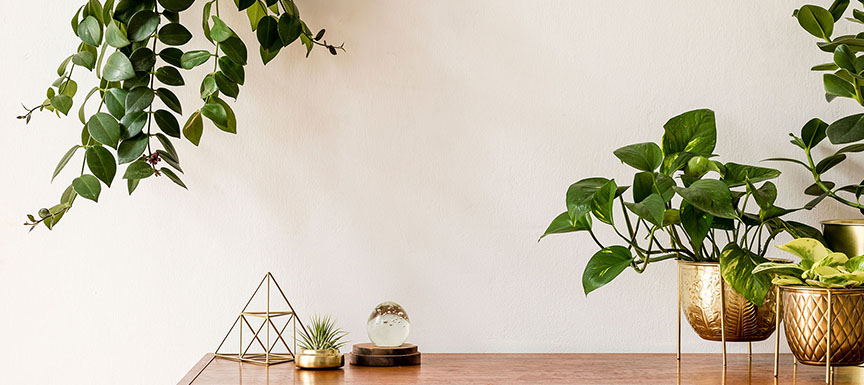 Go Green with Plants